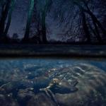 """Имре Потио, Венгрия """"Властелин ручья"""". Предоставлено: Международный фестиваль дикой природы """"Золотая черепаха""""."""