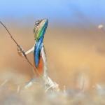 """Ануп Деодхар, Индия """"Воин лугов"""". Предоставлено: Международный фестиваль дикой природы """"Золотая черепаха""""."""