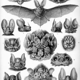 Звери-лётчики. Выставка о млекопитающих, рискнувших подняться в воздух. Предоставлено: Государственный Дарвиновский музей.